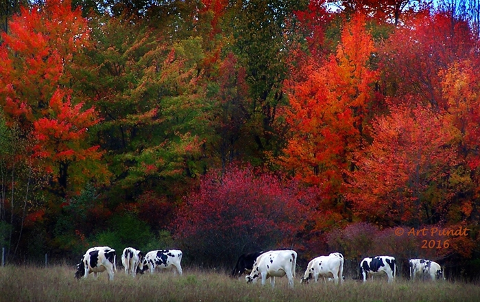 Art Pundt captures a fall scene.