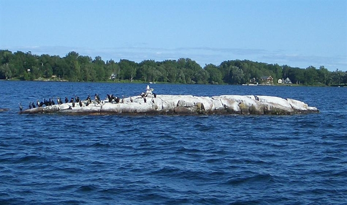 To qualify as one of the numbered islands, it must be above water and have a tree. These Cormorants don't care whether this is an island or not... it's a great fishing spot.