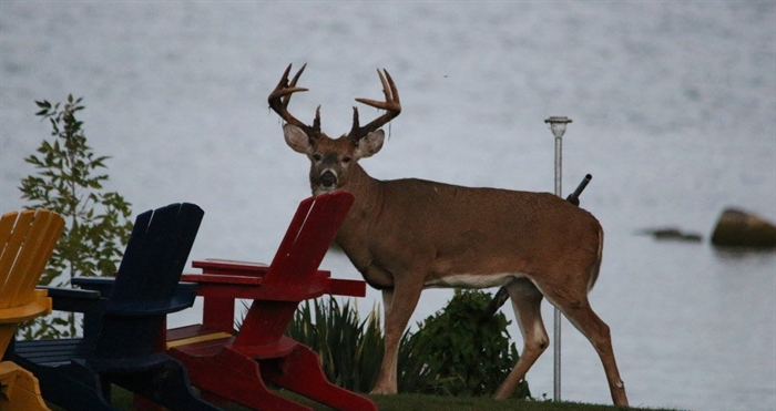 Lynda Crothers has a special visitor to Wolfe Island.