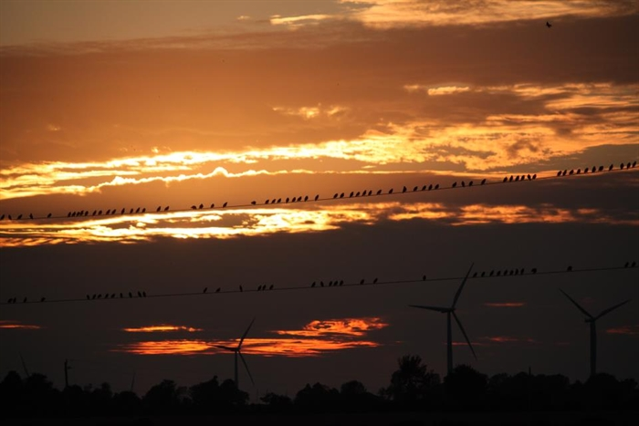 Wolfe Island's birds on the line by Lynda Crothers