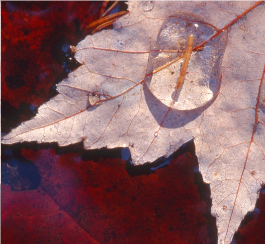 © Vici Diehl, 2012, originally used to promote the Indian Lakes Land Trust Fall Walk on October 19.