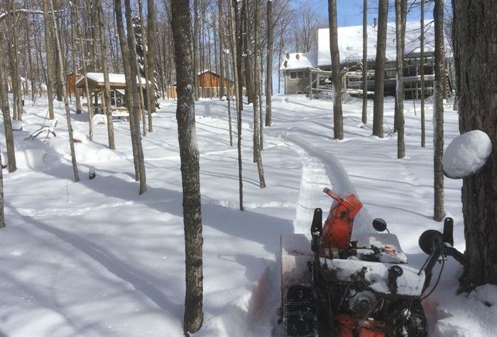Bill Stallan makes his way the the maple trees on his property... getting ready for tapping.